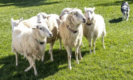 Wool as outstanding opportunity for leverage – wool